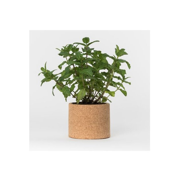 Kit plantation liège - Grow Cork Pot