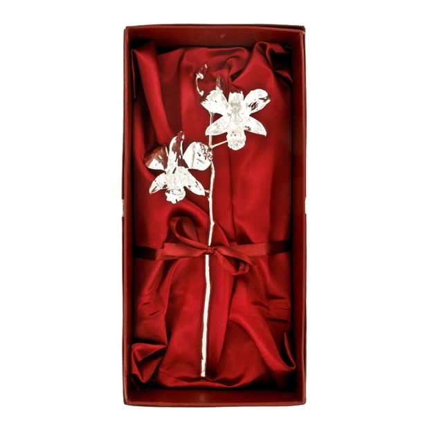 Orchidee d'argent