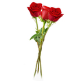 Rosen rot Gr. 03er Bund