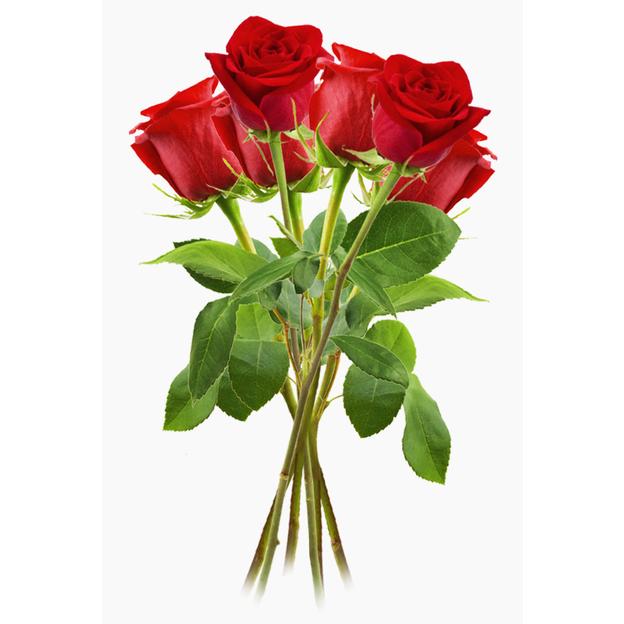 Rosen rot Gr. 09er Bund