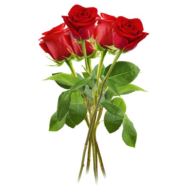 Rosen rot Gr. 12er Bund
