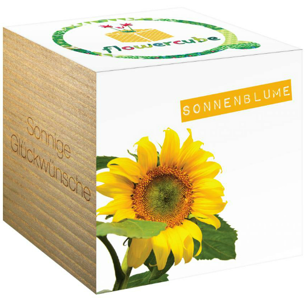 FlowerCube Pflanze Sonnige Grüsse Sonnenblume