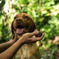 Trüffelsuchkurs für Hunde