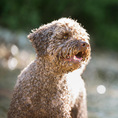 Professionelle Pferde- und Hundefotografie