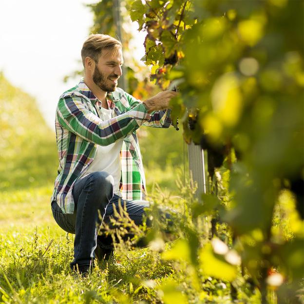 Parrainage d'un cep de vigne (Argovie)