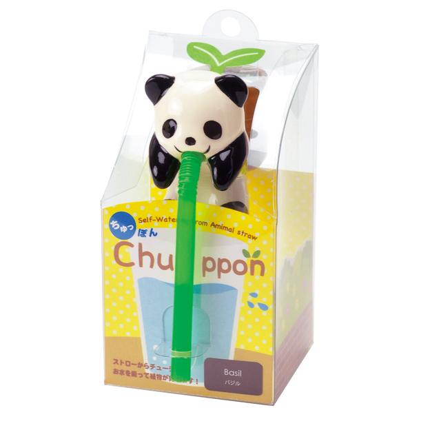 Chuppon panda - Basilic