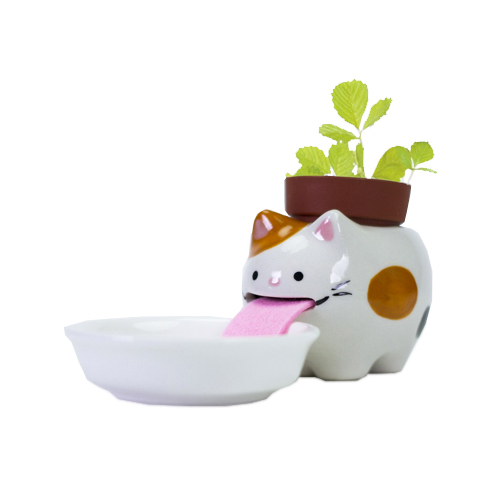 Peropon Katze - wilde Erdbeere