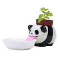 Peropon panda - basilic
