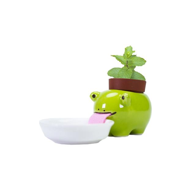 Peropon grenouille - menthe