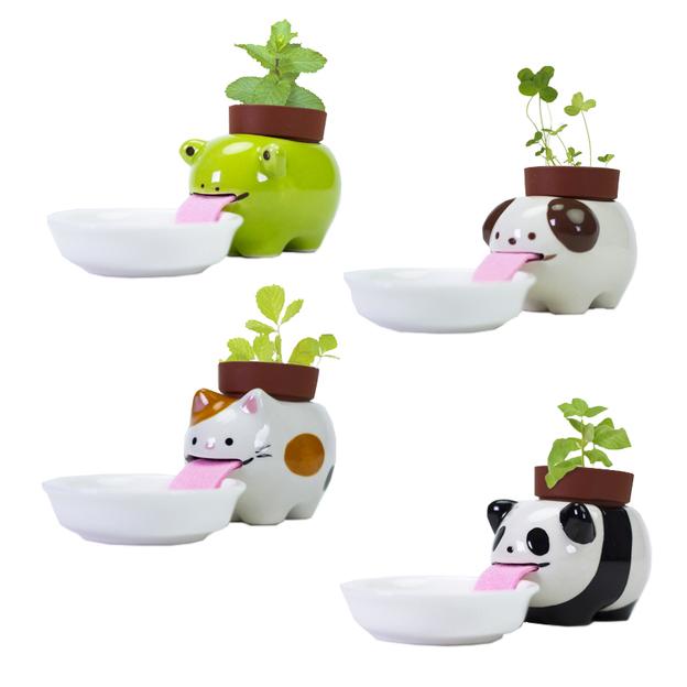 Plante à faire pousser Peropon – Animaux buveurs