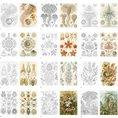 Livre à colorier pour adulte Fleurs & Nature