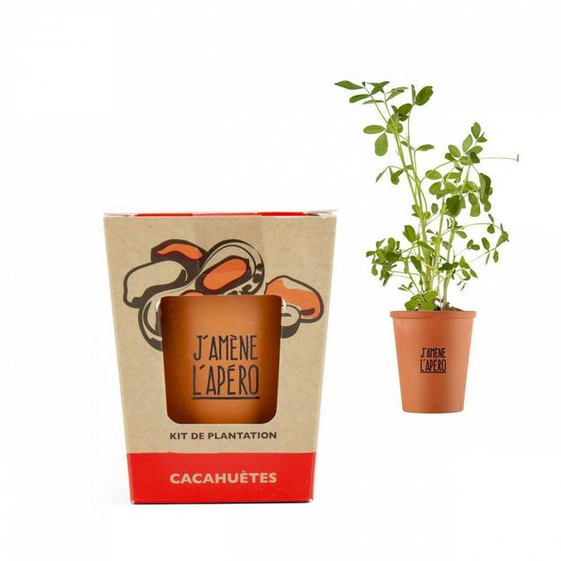 Apéro Pflanze Erdnuss