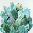 Tableau Cactus peint à la main 100 x 100 cm