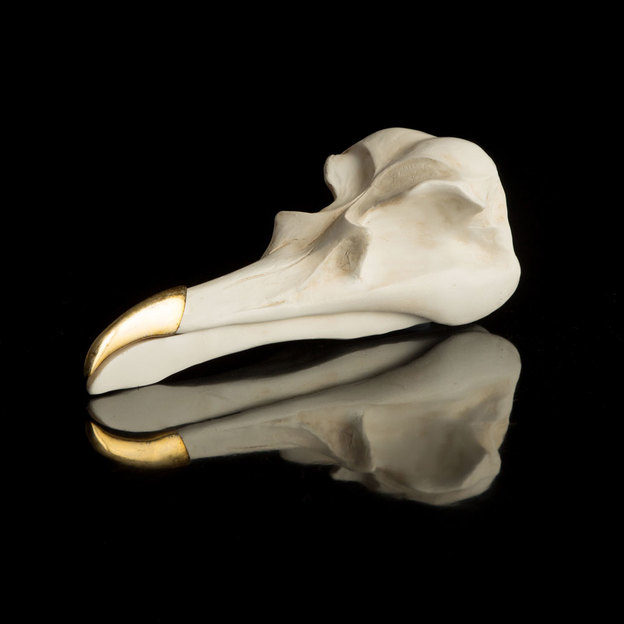 Schmuckkasten Bird Skull