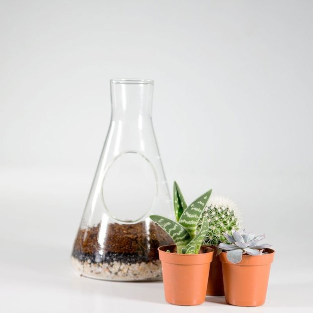 mini pflanzen terrarium in chemie flasche. Black Bedroom Furniture Sets. Home Design Ideas