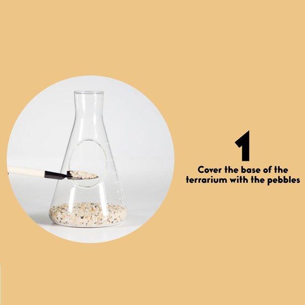 Mini Pflanzen Terrarium in Chemie-Flasche