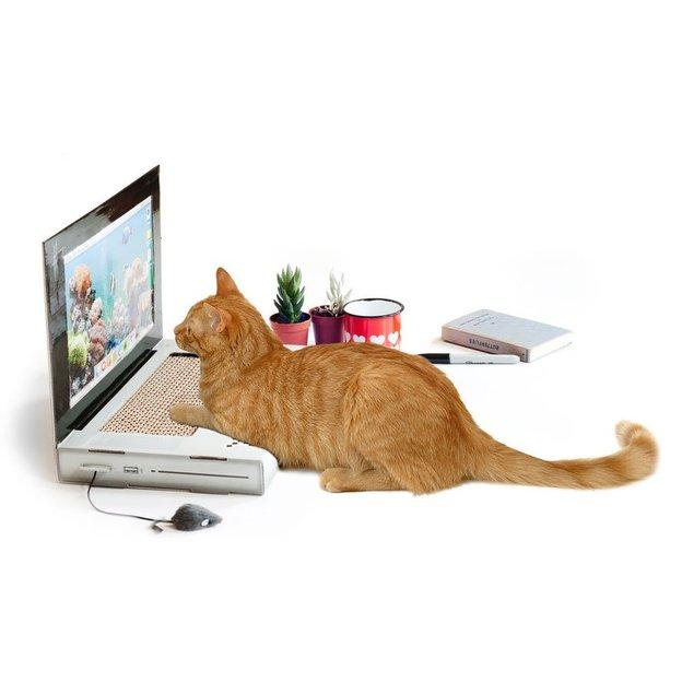 Katzen Kratz Laptop