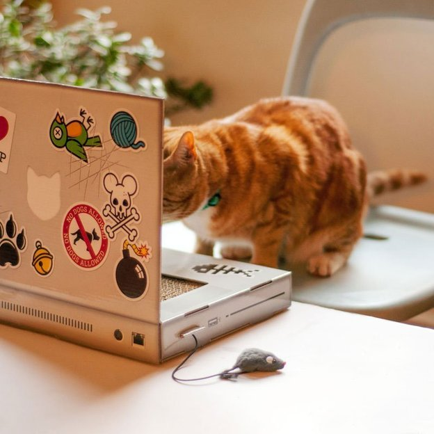 Katzen Kratz-Laptop