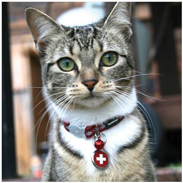 Médaille personnalisée chien et chat fantaisie Ø 20 mm