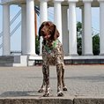 Personalisierbare Hunde- & Katzenmarke Edelstahl farbig Ø 30mm