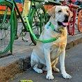 Personalisierbare Hunde- & Katzenmarke Edelstahl farbig Ø 38mm
