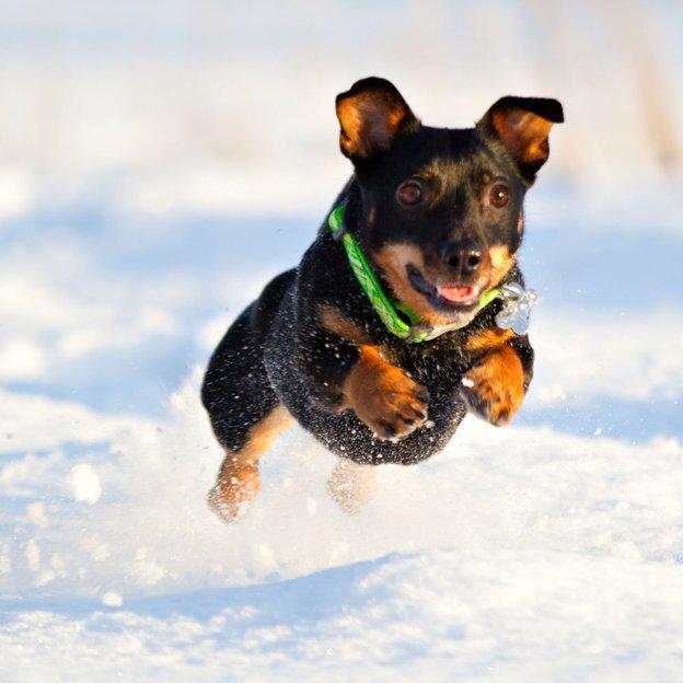 Personalisierbare Hunde- & Katzenmarke Edelstahl small