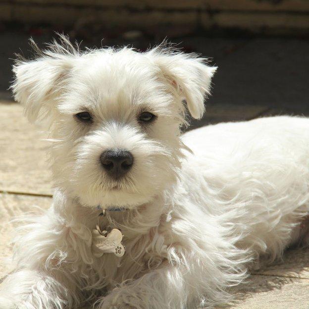 Personalisierbare Swarovski Hunde- & Katzenmarke medium