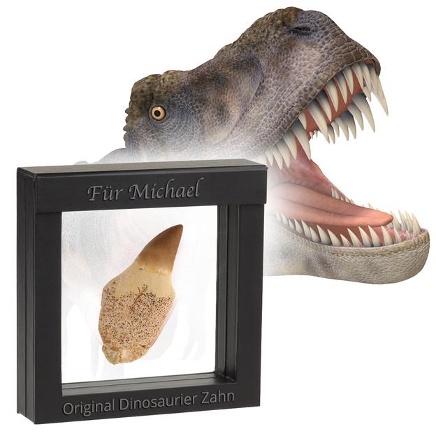 Original Dinosaurier Zahn personalisiert