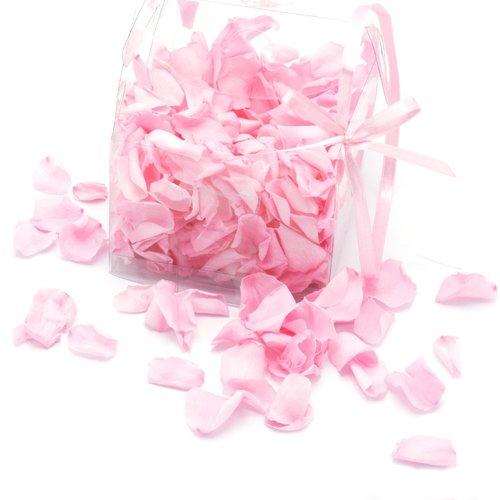Ewige Rosenblätter rosa