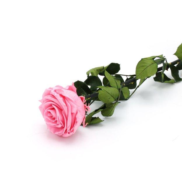 Rose à vie - rose