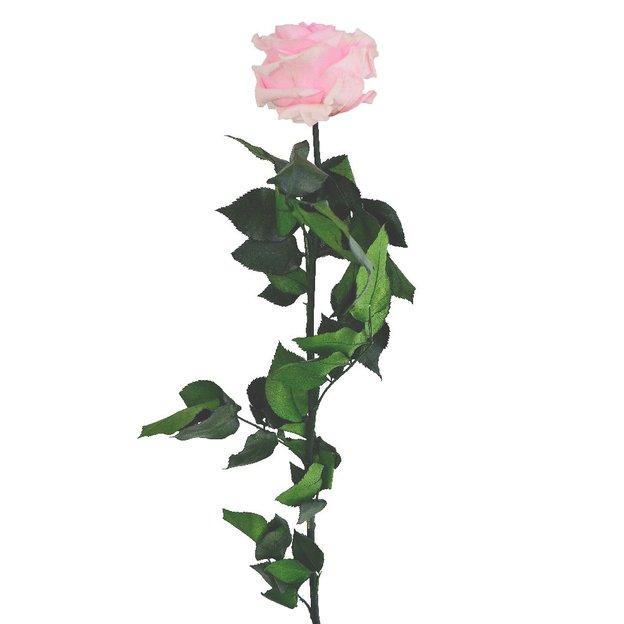 XXL Rose am Stiel Rosa I geschenkidee.ch
