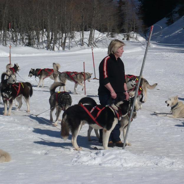 Aventure Husky dans l'Oberland bernois (1 pers.)