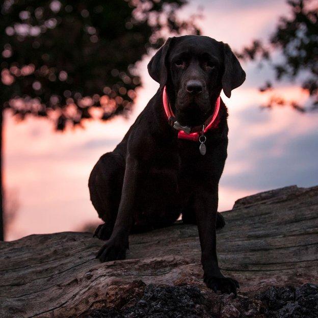Personalisierbare Hunde- & Katzenmarke Edelstahl Herz