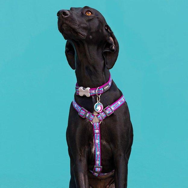 Collier pour chien Red Dingo Licorne M