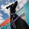 Harnais pour chien Red Dingo Licorne S