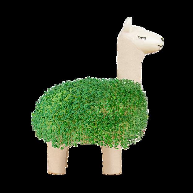 Kit plante Lama DIY