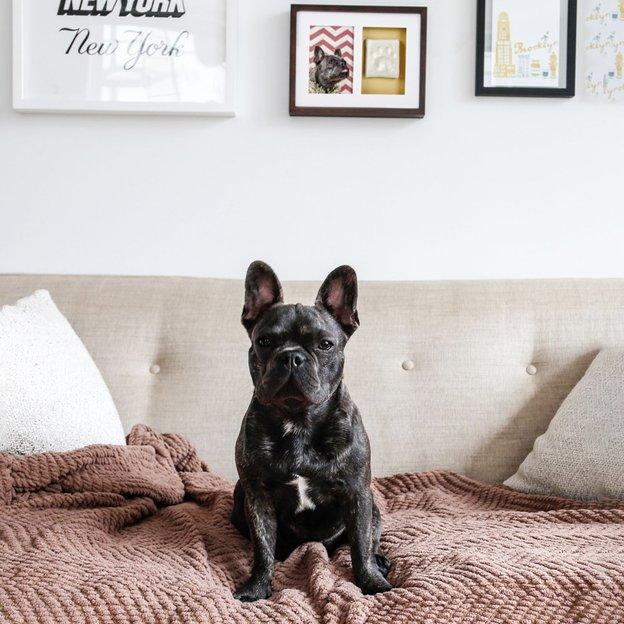 Cadre photo chien et chat avec empreinte