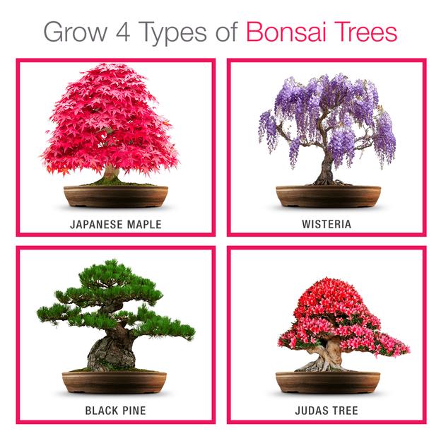Kit de plantation pour bonsaï Grow Buddha