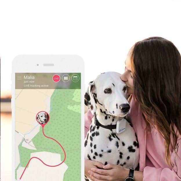 Tracker GPS pour chien