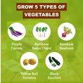Kit légumes à faire pousser