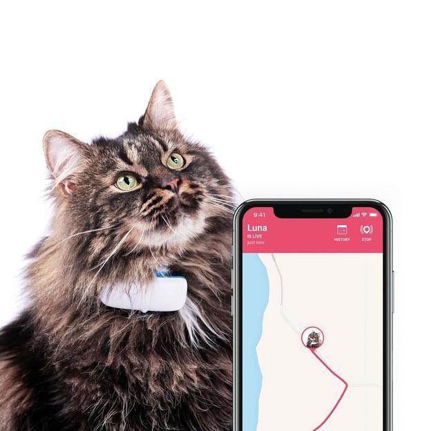 Balise GPS live pour chats
