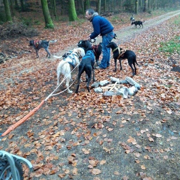 Schlittenhunde Abenteuer mit Bike oder Wagen im Berner Mittelland (für 1 Person)