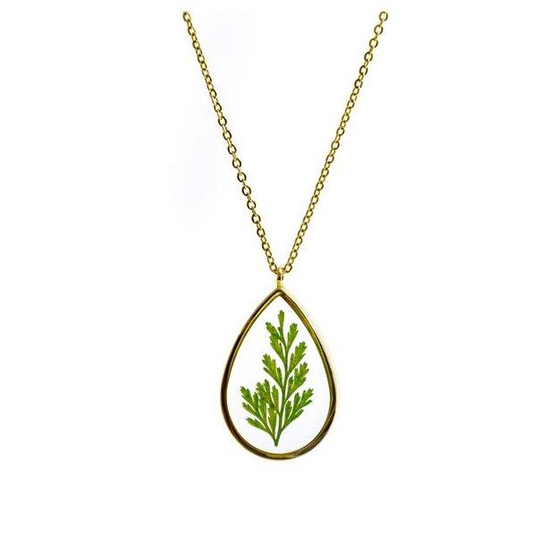 Collier Oriental Arborvitea