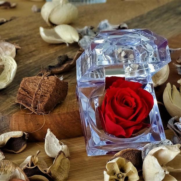 Ewig blühende Rose in Geschenkbox