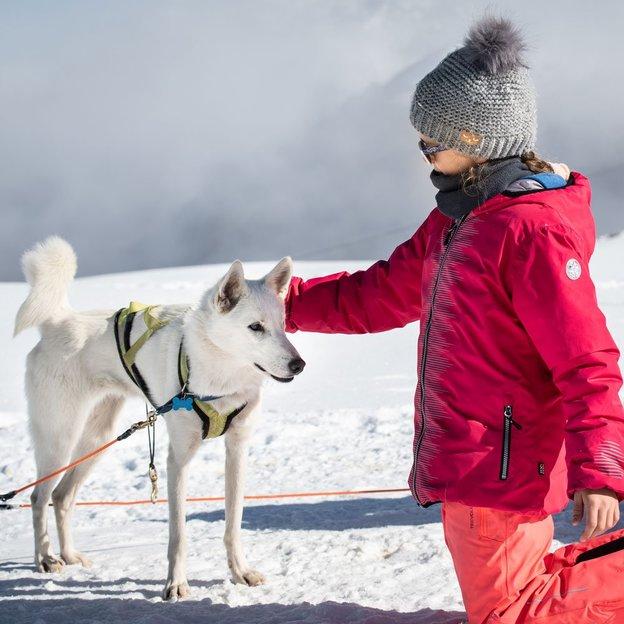 Husky Schlittenfahrt am Fuß des Matterhorns (für 1 Person)