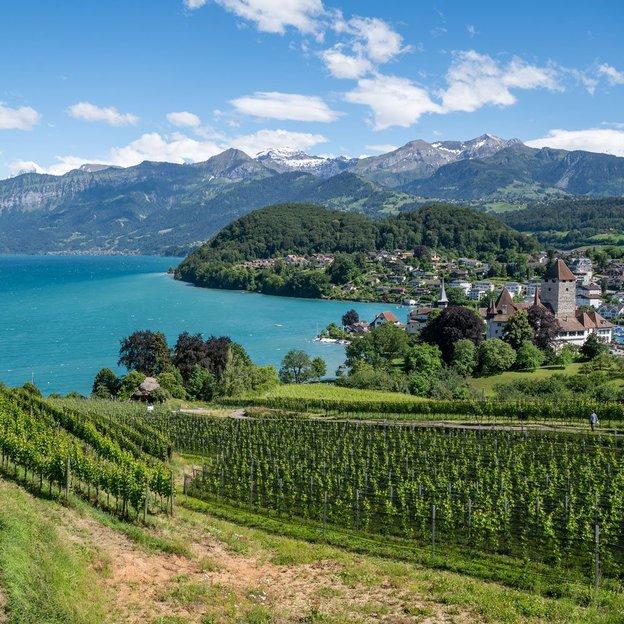 Croisière sur le lac de Thoune avec visite du château de Spiez & vin (1re classe, 1 personne)